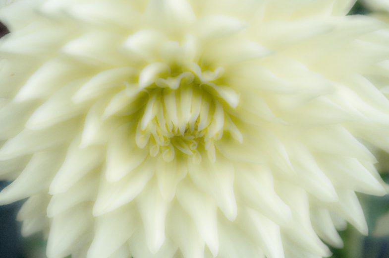 NHK連続テレビドラマ「隠れ菊」へ物件写真.netの写真提供